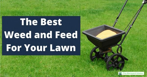 The best weed and feed for your lawn
