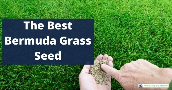 The best bermuda grass seed