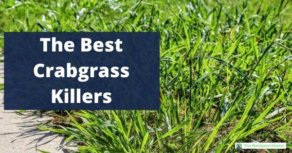 The Best Crabgrass Killer