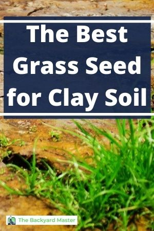 How to choose grass seed for clay soil
