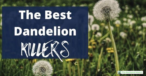 the best dandelion killers