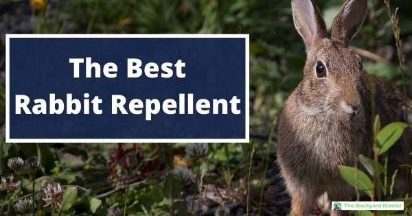 The Best Rabbit Repellent: Our #1 Top Pick - The Backyard ...