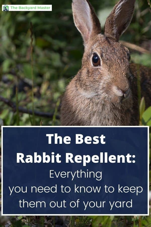 How to keep rabbits out of your yard; rabbit repellent review