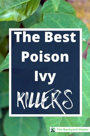 The top poison ivy killers