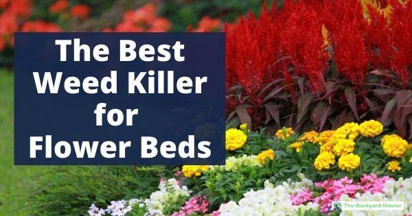 Best weed preventer for flower beds
