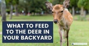 What to feed backyard deer