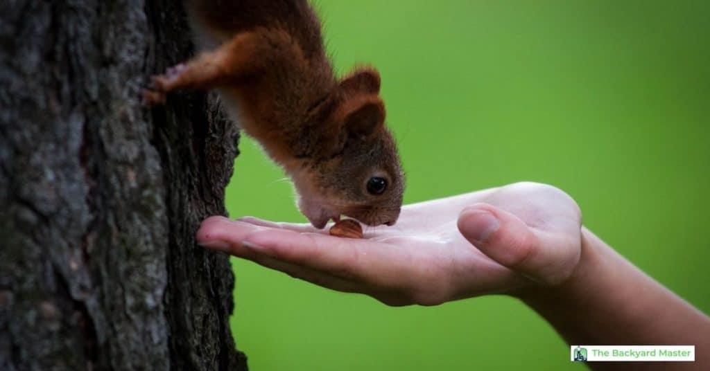 human feeding a squirrel in the backyard