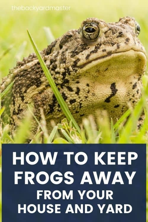 How to keep frogs away from your house and yard