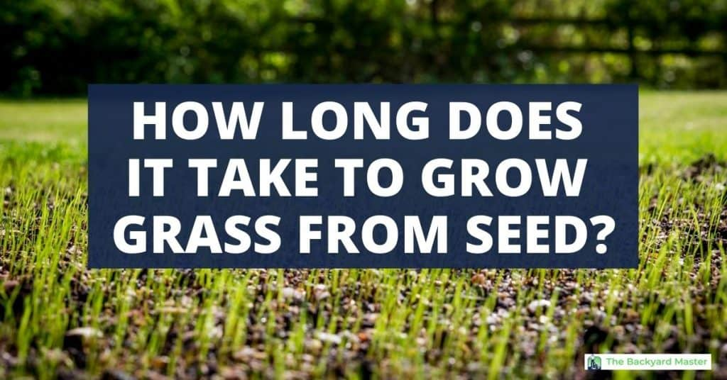 How long does it take grass to grow from seed?