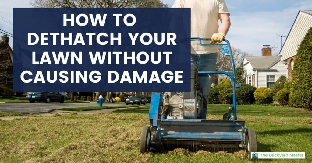 How to dethatch a lawn without causing damage