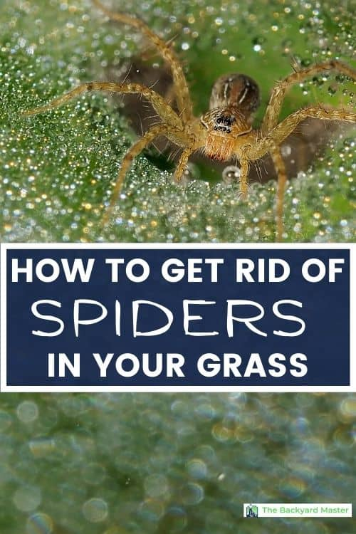 How to get rid of spiders in your grass.