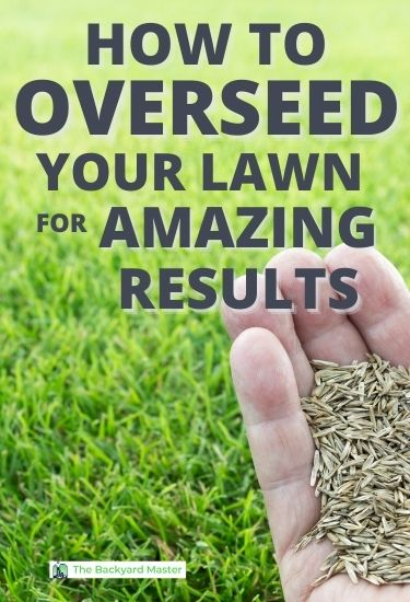 learn how to get great results when you overseed your lawn.
