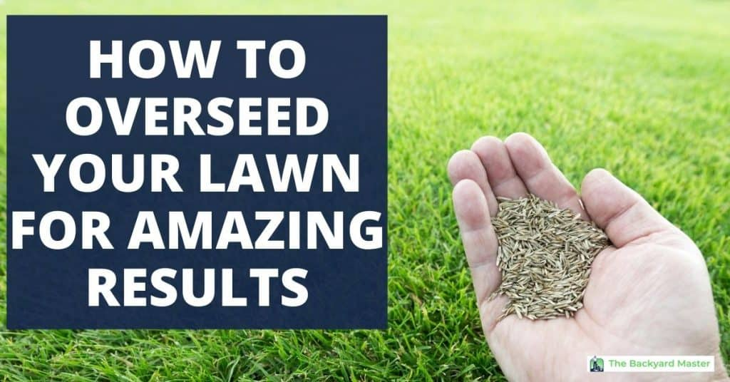 How to overseed a lawn for amazing results.