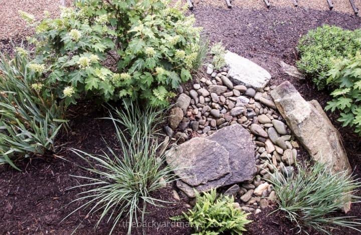 Simple backyard rain garden to absorb excess rain water.