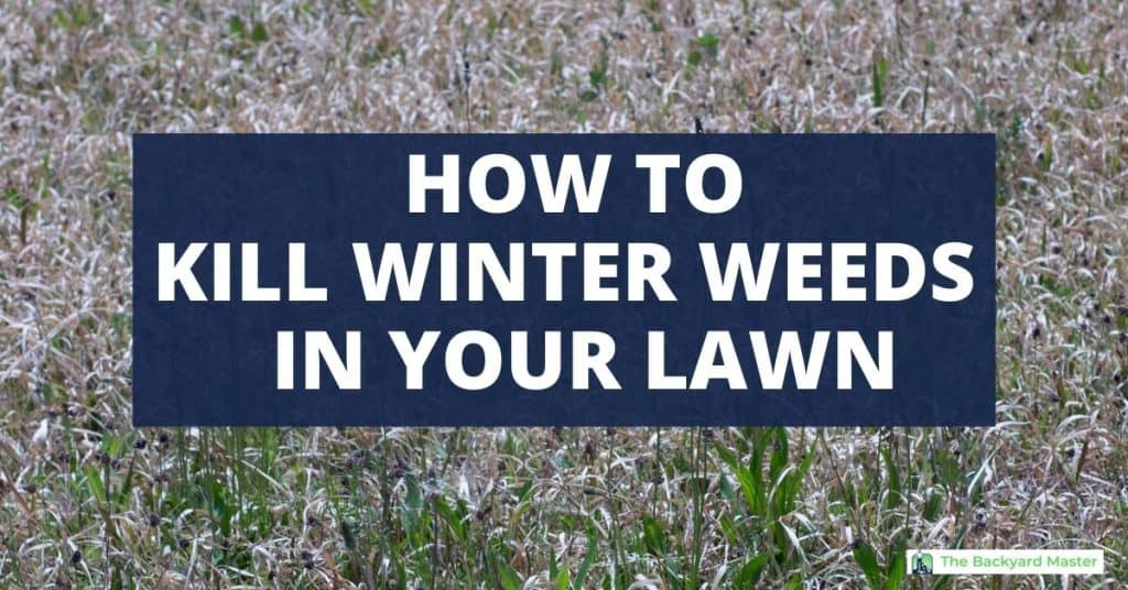 How to kill weeds in winter