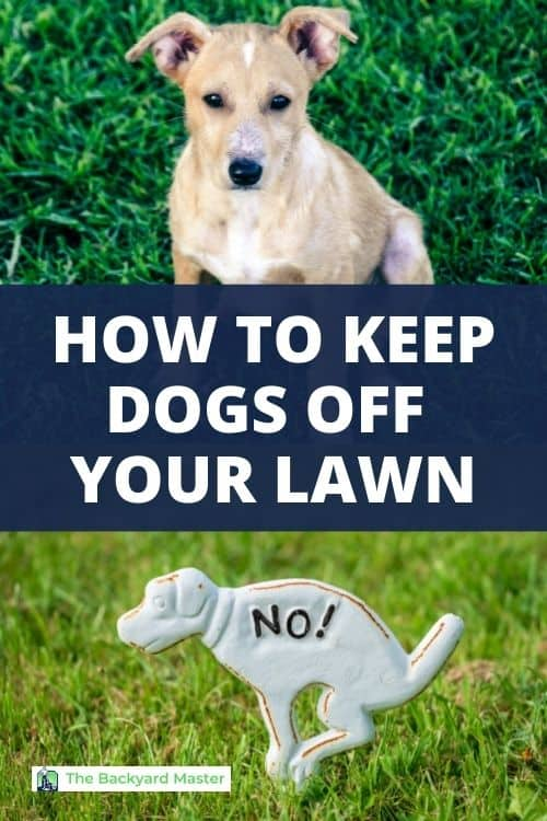 How to keep dogs off your lawn.