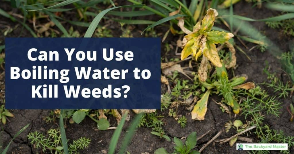 Can you use boiling water to kill weeds?