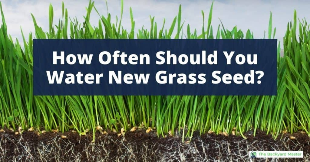 How often do you water new grass seed? Cross section photo of grass growing.