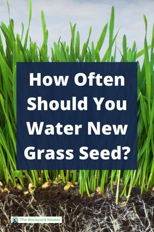 How often should you water new grass seed?