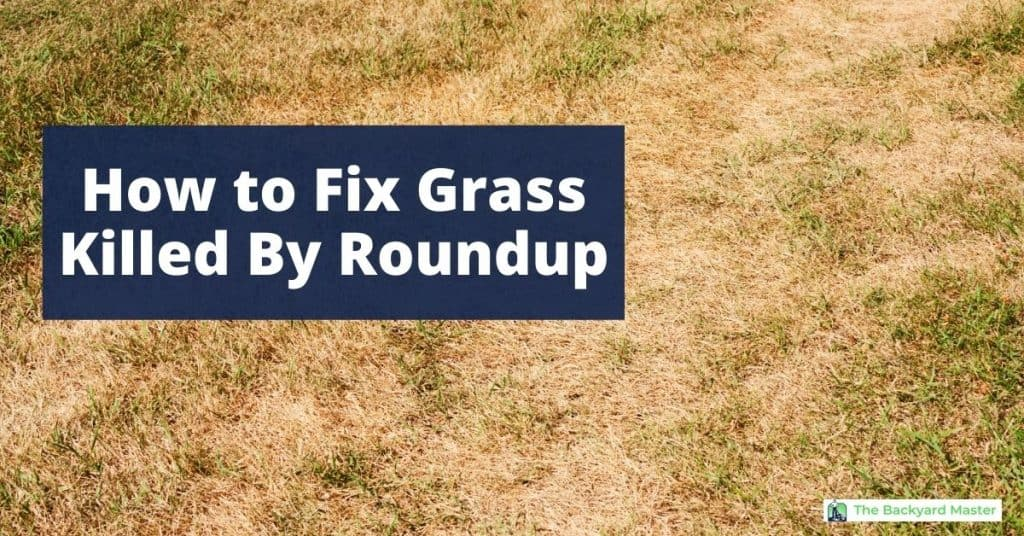 How to fix grass killed by Roundup | Dead lawn.