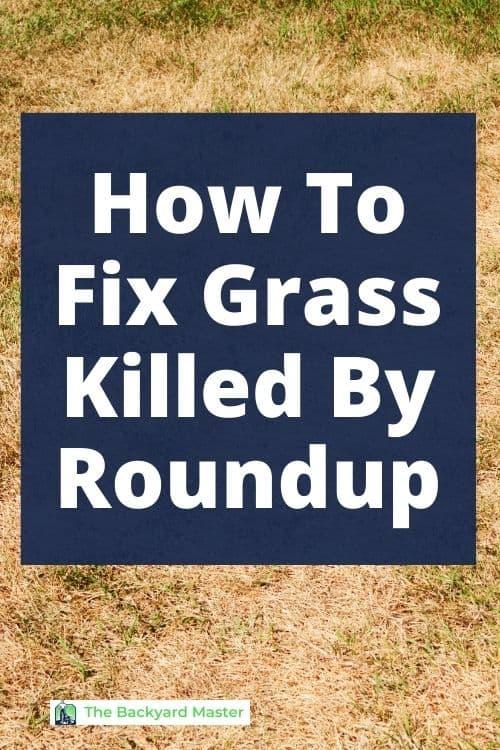 How to regrow grass after Roundup