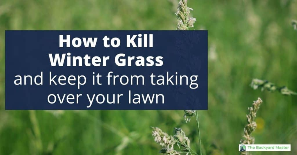 How to kill winter grass in your lawn.