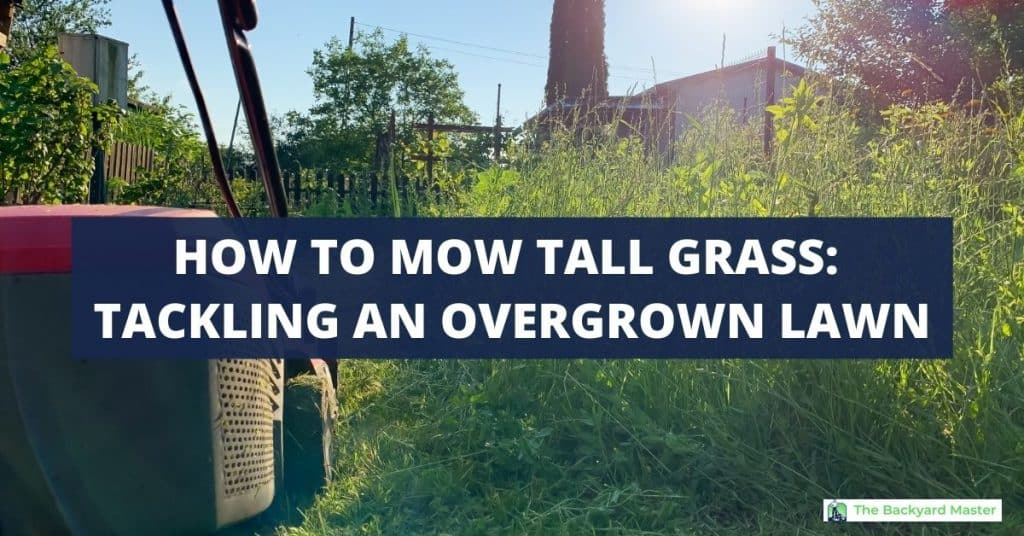 How to mow tall grass | Lawn mower cutting an overgrown lawn