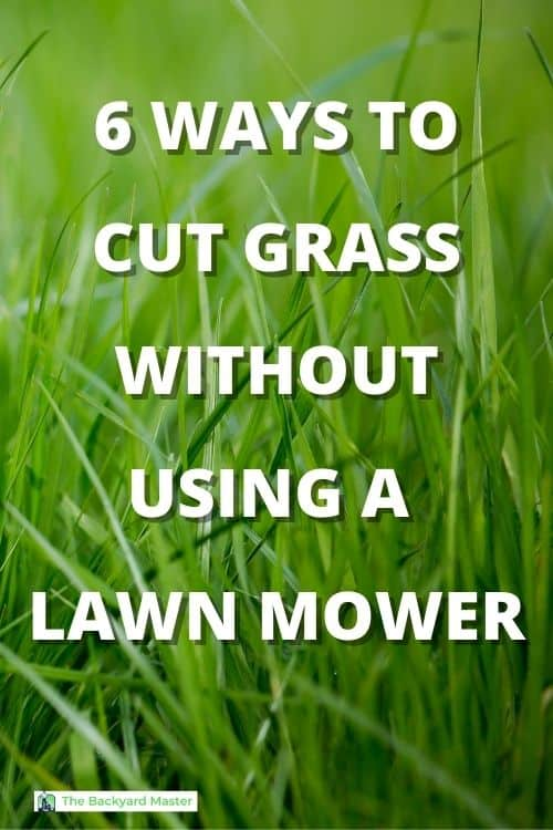 6 WAYS TO CUT GRASS WITHOUT USING A LAWNMOWER
