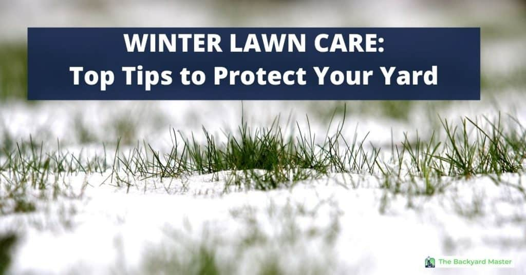 Grass covered with snow | Winter Lawn Care Tips