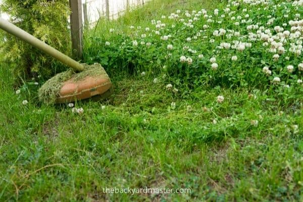 String trimmer being used to cut tall grass.
