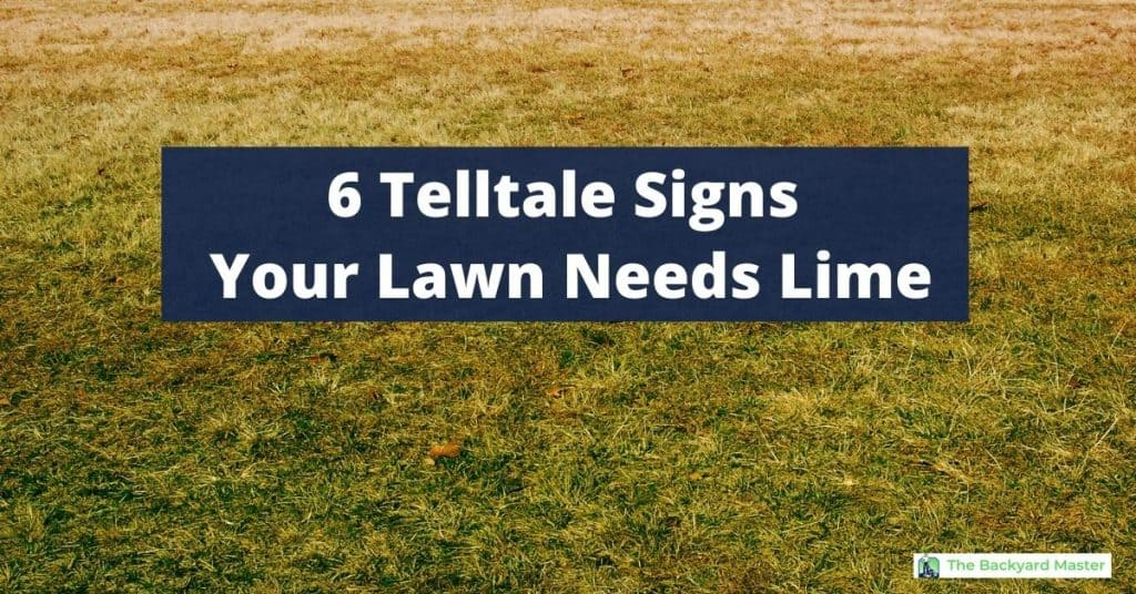How to tell if your lawn needs lime | photo of unhealthy lawn