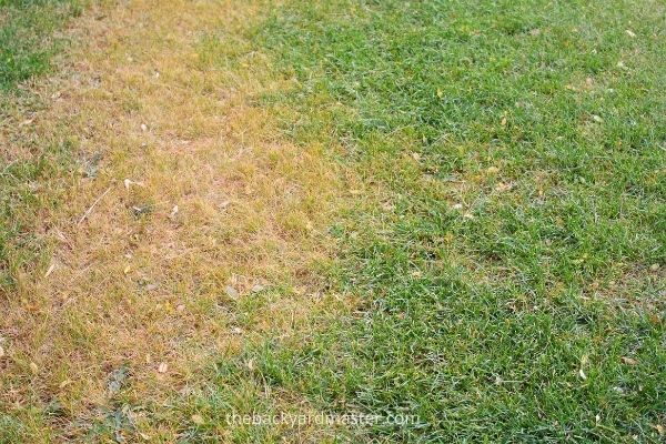 Winter Lawn Care | Monitor for signs of damaged or stress in your lawn.